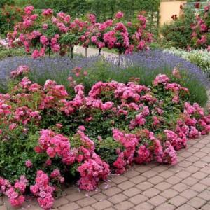 Нюансы по посадке цветов
