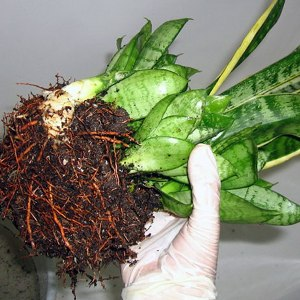 самые эффективные подкормки для комнатных растений