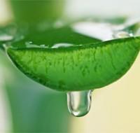 Проверенные способы, как сделать лекарство из зеленого Алоэ в домашних условиях. Расскажем в статье!