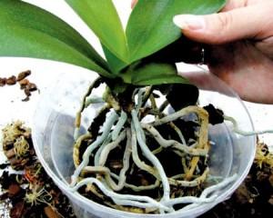 Голубцы из пекинской капусты: рецепт с фото пошагово