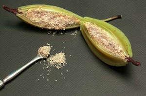 Как вырастить орхидеи из семян в домашних условиях