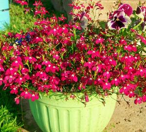 Разновидности многолетних цветов в 13