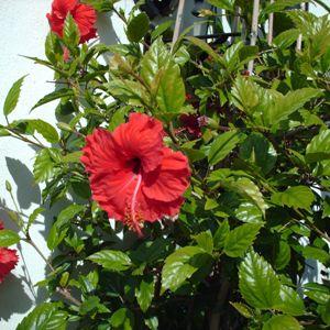 Правильная обрезка цветка