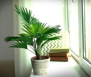 комнатные растения пересадка
