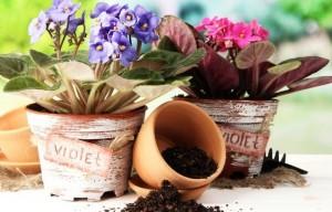 растения пересадка